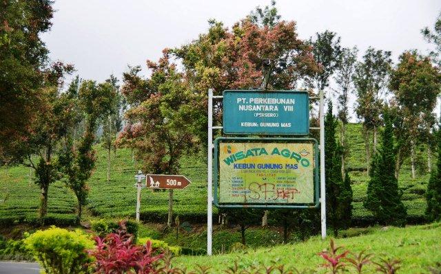 Tempat Wisata Puncak Bogor - Wisata Agro Gunung Mas
