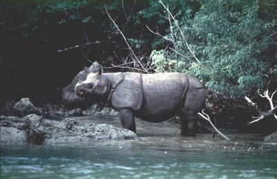 Taman Nasional Ujung Kulon, Tempat Wisata di Serang