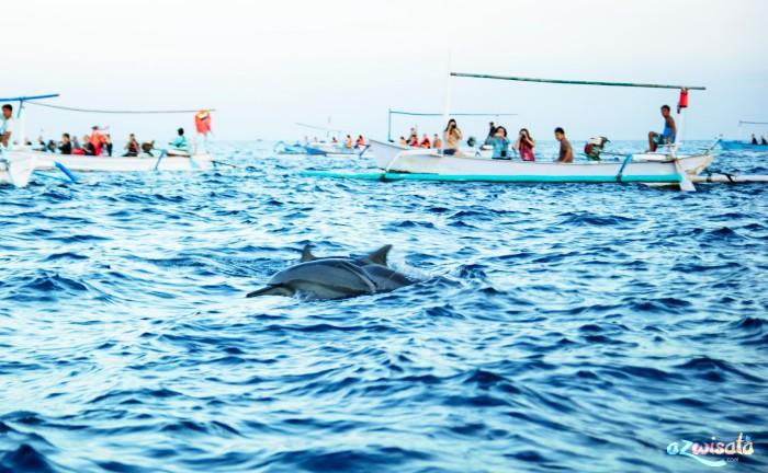 Tempat Wisata Pantai di Bali - Pantai Lovina