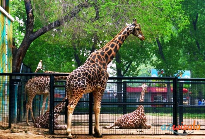 Sinka Zoo - Tempat Wisata di Singkawang