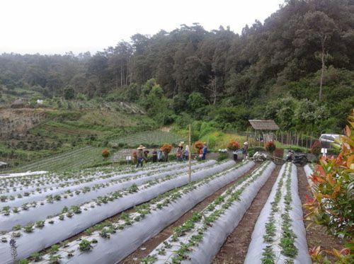 https://www.azwisata.com/wp-content/uploads/2018/07/Tempat-Wisata-di-Sumatera-Utara-Kebun-Raya-Tongkoh.jpg